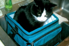 My Cat Sparky in Cooler