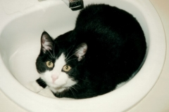 My Cat Sparky in Sink