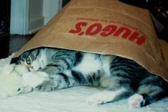 Spike in Bag