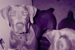My Sister's Dogs Zeus and Apollo
